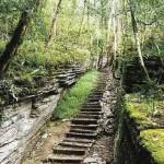 Экскурсия в Тисо-Самшитовую рощу