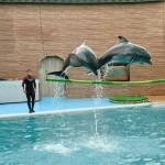 Экскурсия в Дельфинарий в Адлере