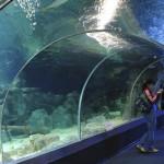 Экскурсия в океанариум в адлере